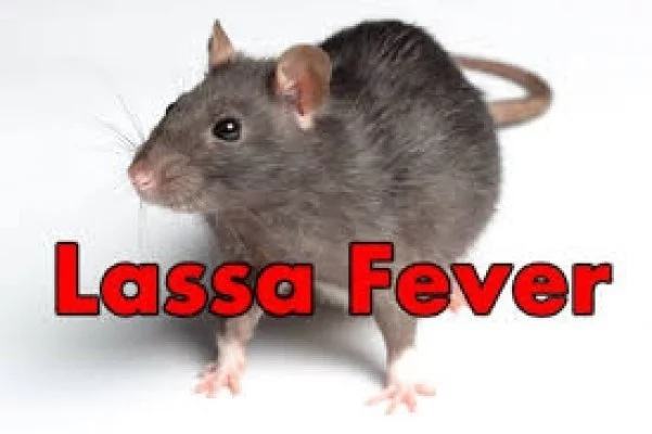 Lassa fever: Delta Government tasks residents on engagement of pest, vectors control consultants